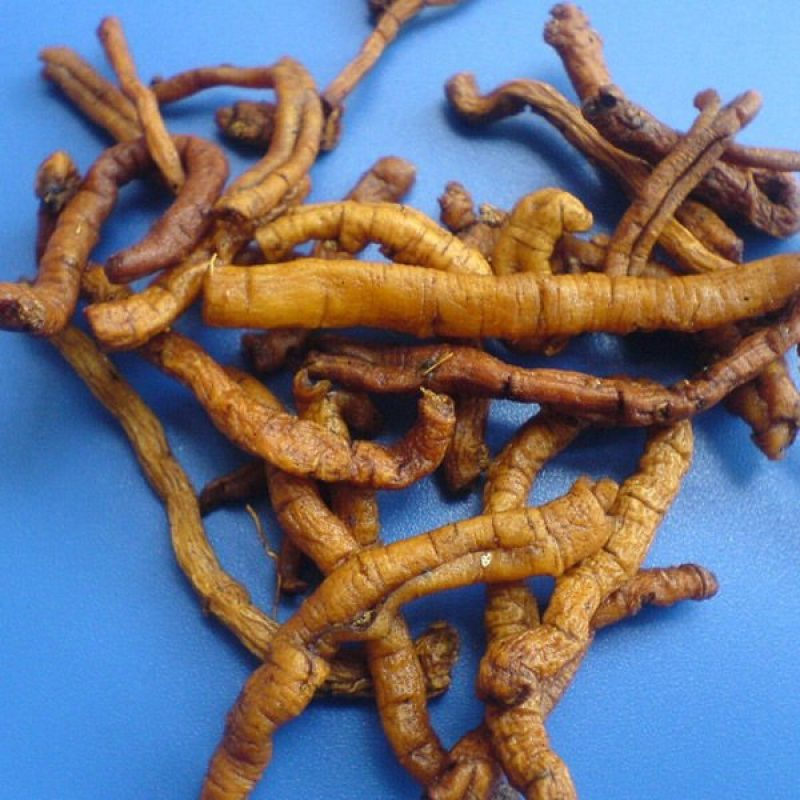 Polygala Root-Polygala root the super herb